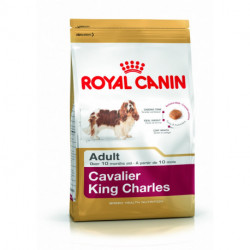 CROQUETTES CAVALIER KING CHARLES ADULTE ROYAL CANIN