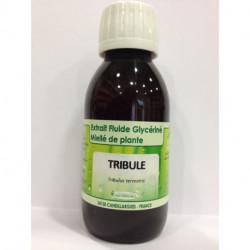 Tribule - Extrait Fluide Glycériné Miellé de plante Bio - Phytofrance